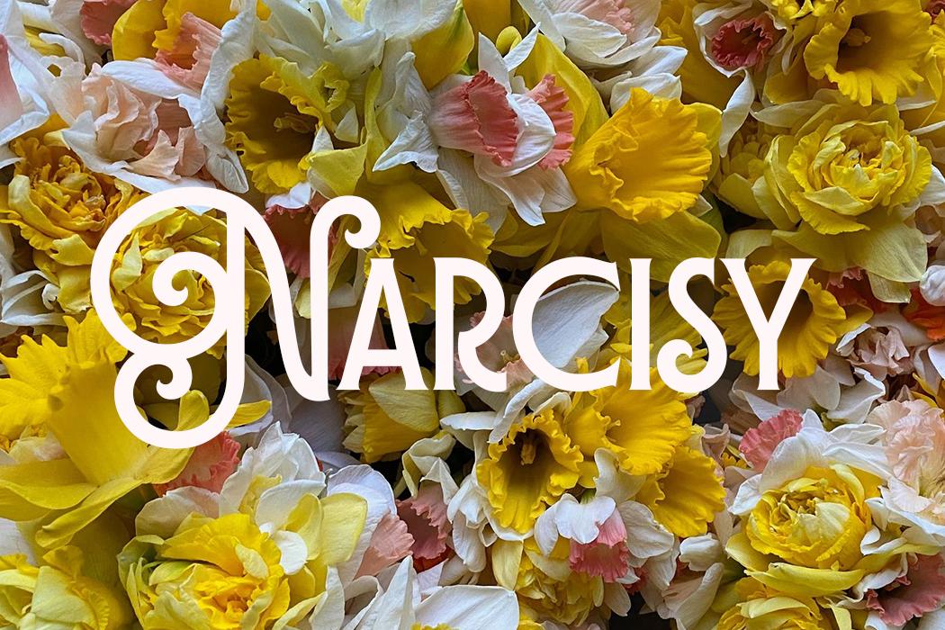 Narcisy — cibulky